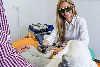 Tierarzt Besserer Physiotherapie: Hund bei Lasertherapie