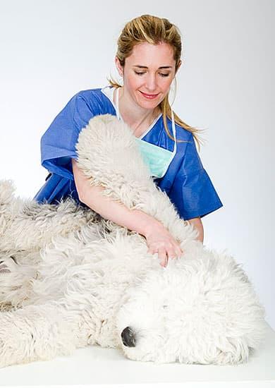 Tierarzt Besserer Physiotherapie Druck Massage