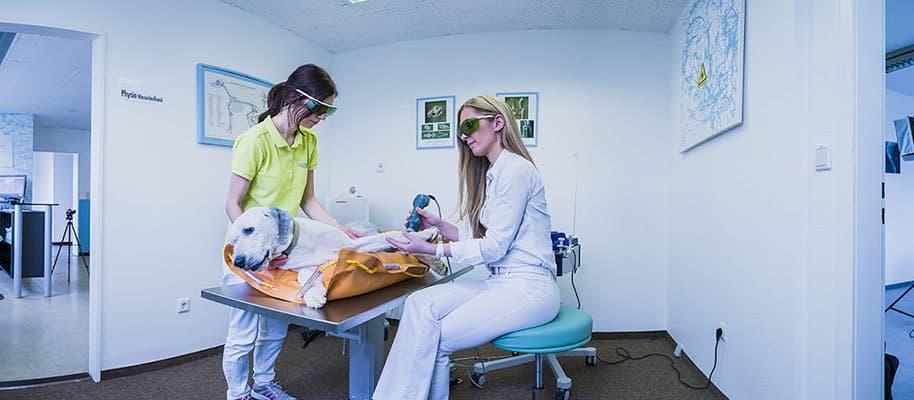 Tierarzt Besserer Physiotherapie Laserbehandlung Panorama